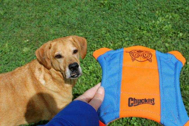 Chuckit! dog toys