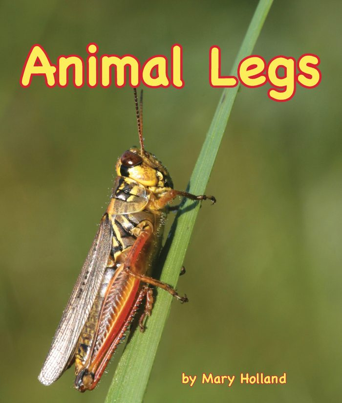 Animal Legs by Mary Holland