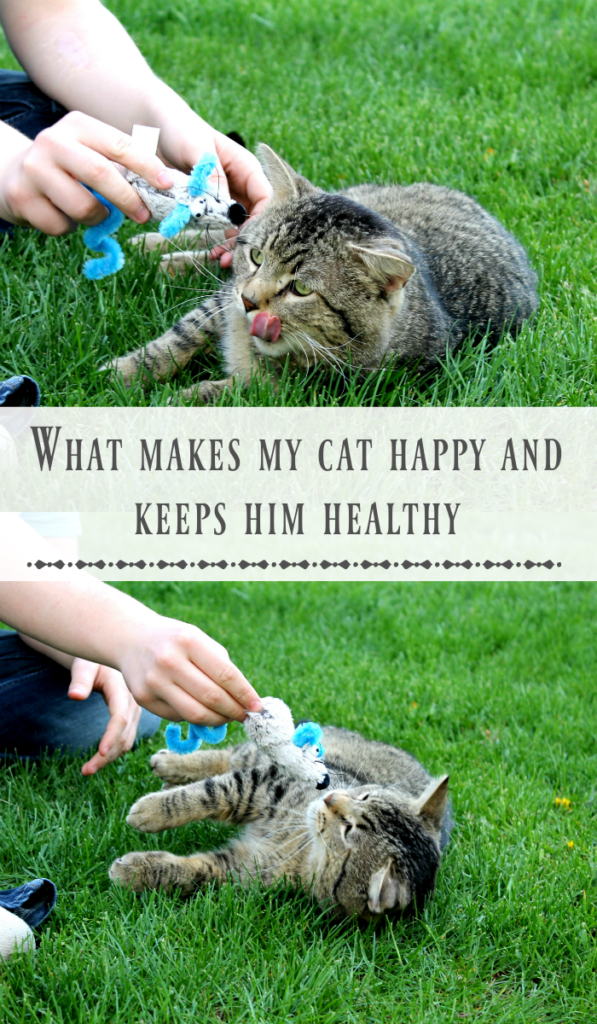 what makes my cat happy