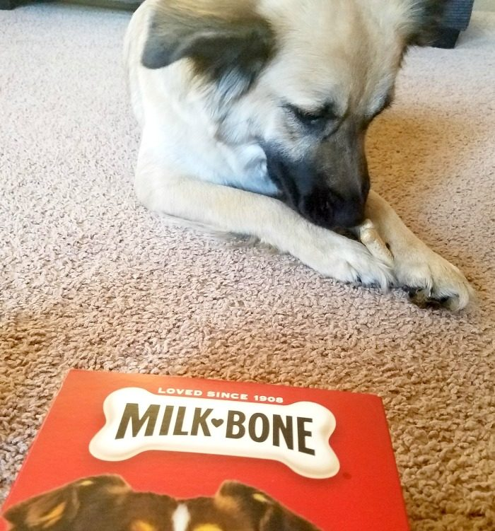 Milk-Bone Active Toys Stimulate Dog Treat Time