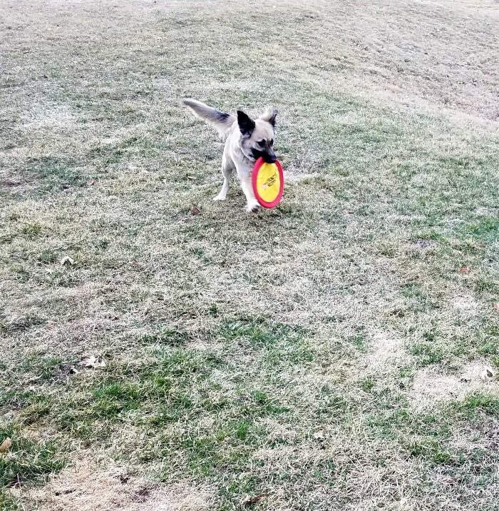 Ways to Have Fun with Your Pup this Spring