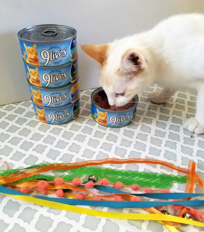 DIY Cat Ribbon Wand Toy