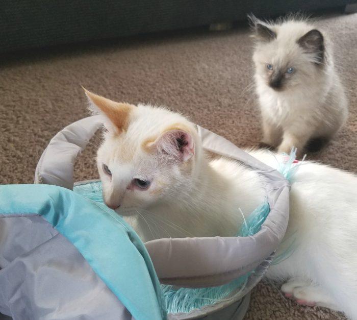 Household Uses for Cat Litter