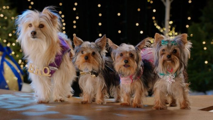 Puppy Star Christmas Available on Netflix and Digital HD