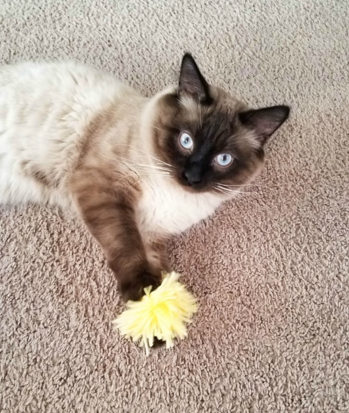 DIY PomPom Cat Toy