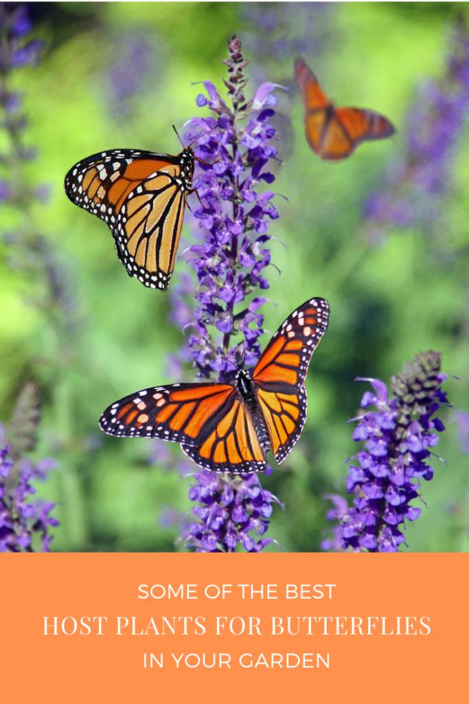 Host Plants for Butterflies