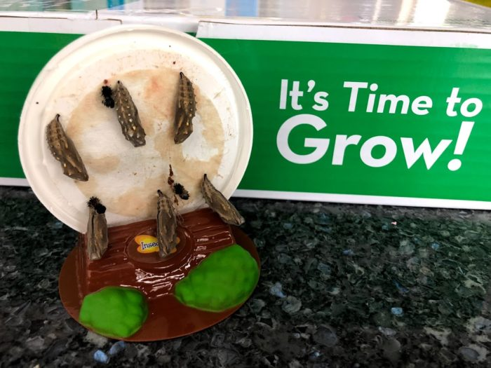 With The Butterfly Farm Watch Caterpillars Morph into Butterflies in Your Home!