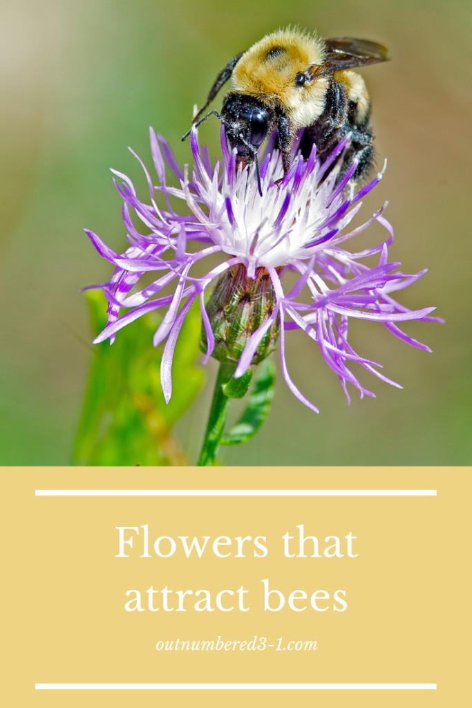 What Kind of Flowers Attract Bees