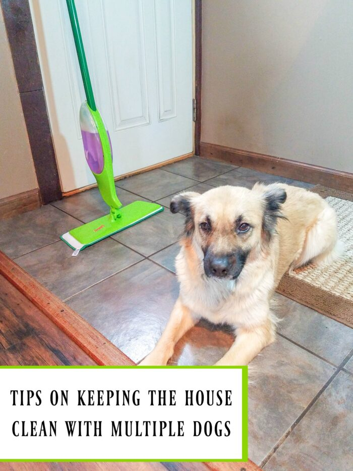 tips for keeping the house clean with multiple dogs
