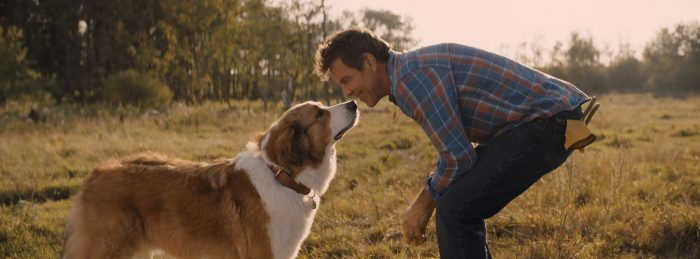 A Dog's Journey on Digital, Blu-ray & DVD