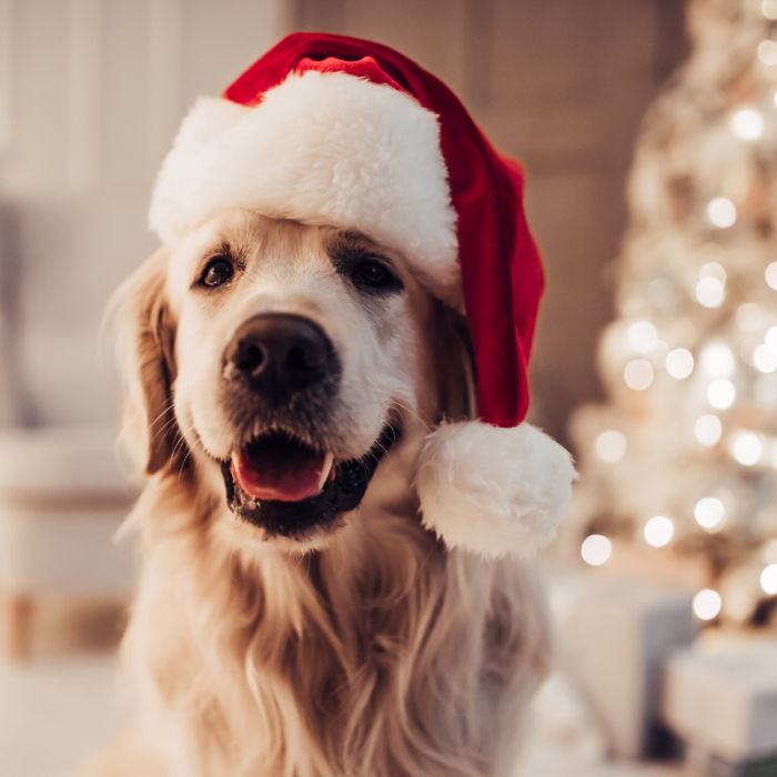 christmas safety tips for pet owners