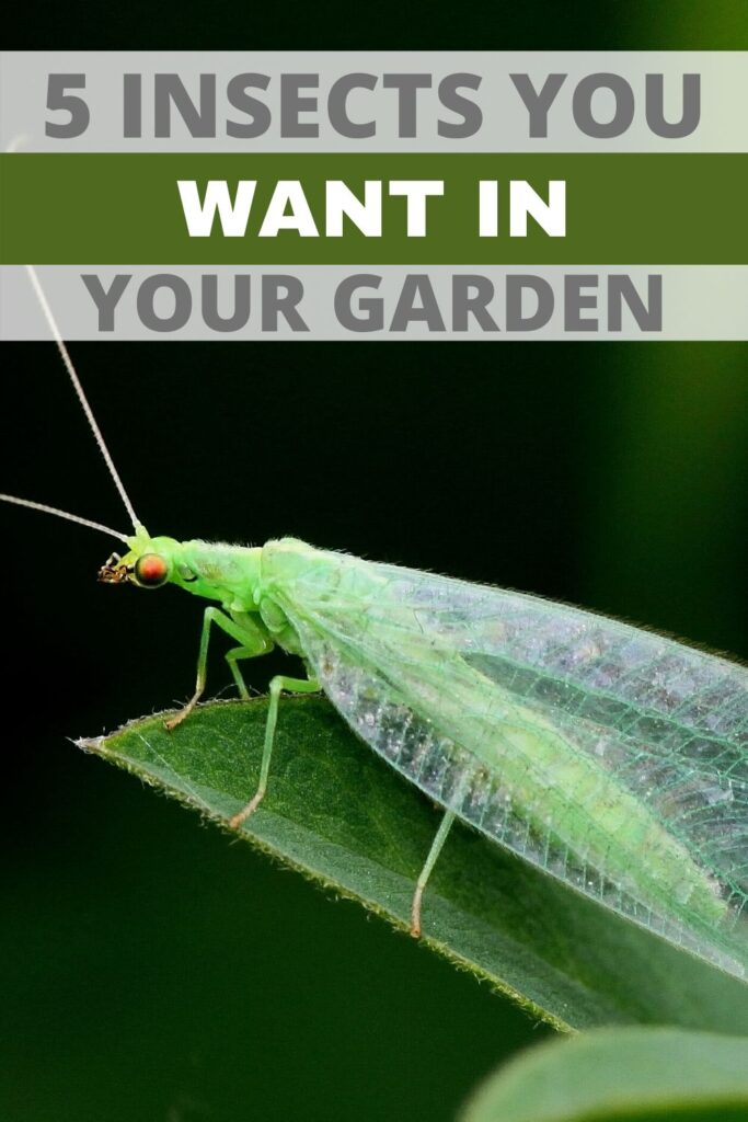 5 insects to welcome to your garden